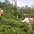 teagarden01.jpg