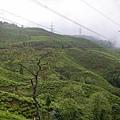teagarden02.jpg