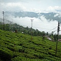 teagarden05.jpg