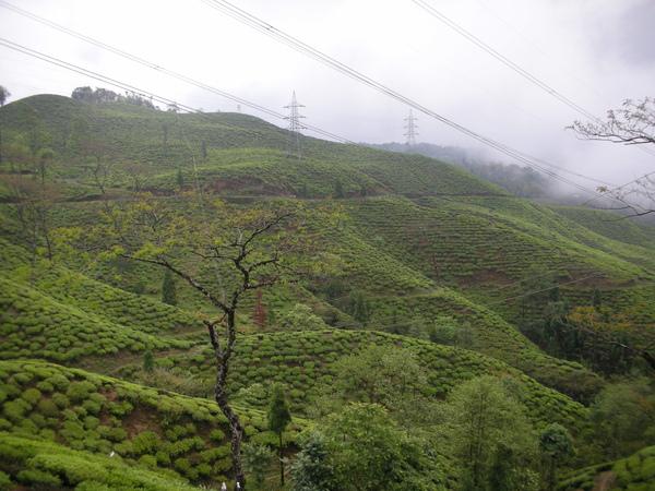 teagarden07.jpg