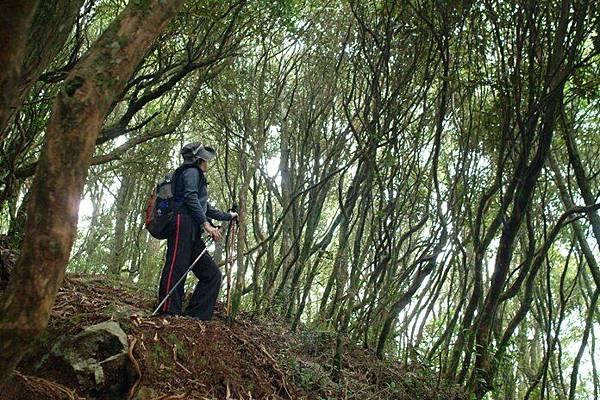 走在樹林裡,一整個舒服.JPG