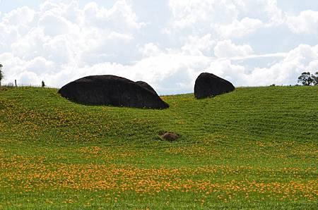 赤柯山金針花與著名的三個大石頭.jpg