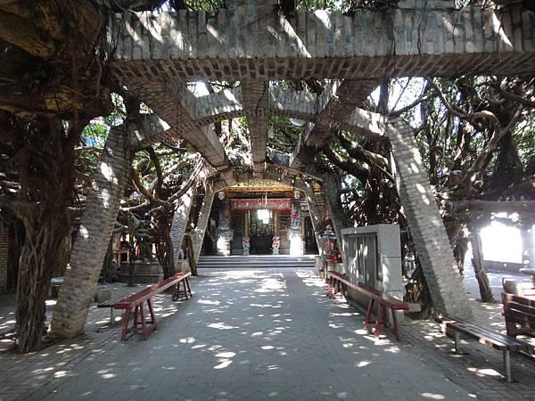 通樑古榕位在白沙島西邊的保安宮前,鄰近跨海大橋,至今已有三百年的樹齡歷史,約有九十多條的榕樹氣根,樹蔭更廣達六千六百公尺的範圍,當地民眾稱之為神木