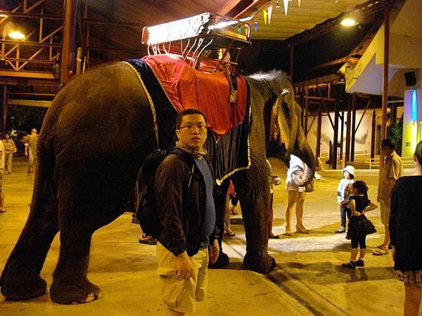 夢幻天使秀真的有上台的大象.JPG