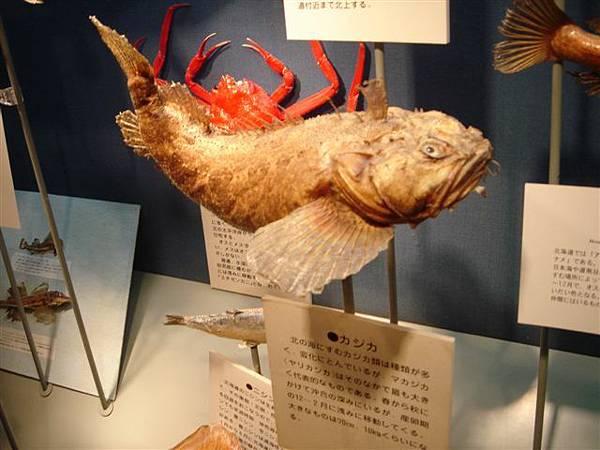 037_深海魚.JPG
