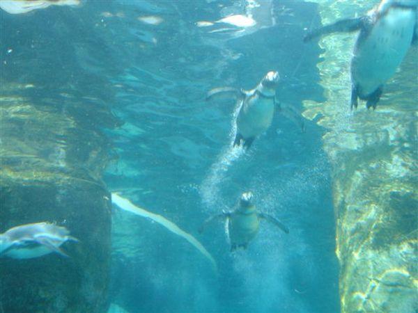 011_企鵝.JPG