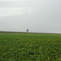 014_七星樹.JPG