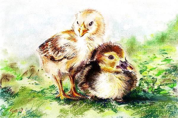 雞和鴨說.JPG