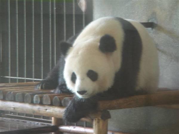023_熊貓.JPG