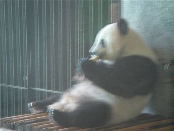 024_熊貓.JPG