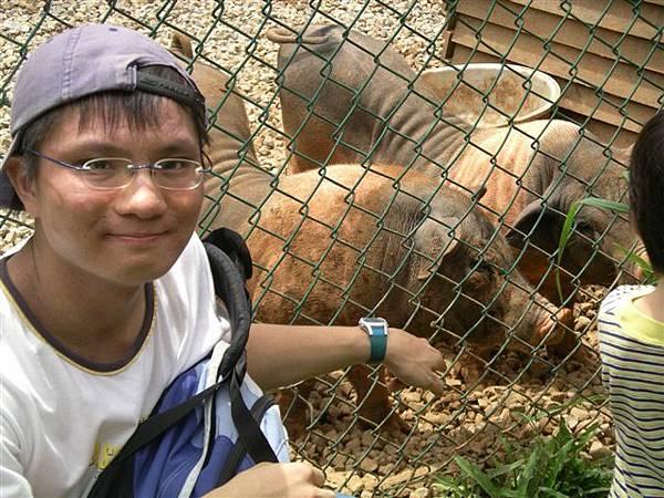 03豬豬.JPG