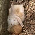 05兔兔.JPG