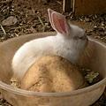 07兔兔.JPG