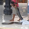 089_蟒蛇.JPG