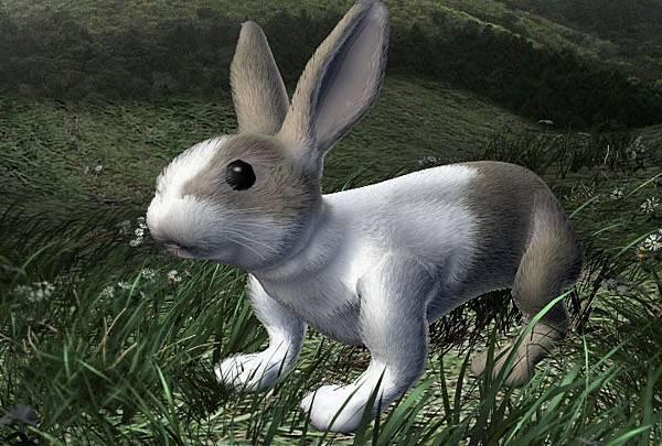 Hare001.jpg