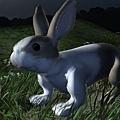 Hare002.jpg