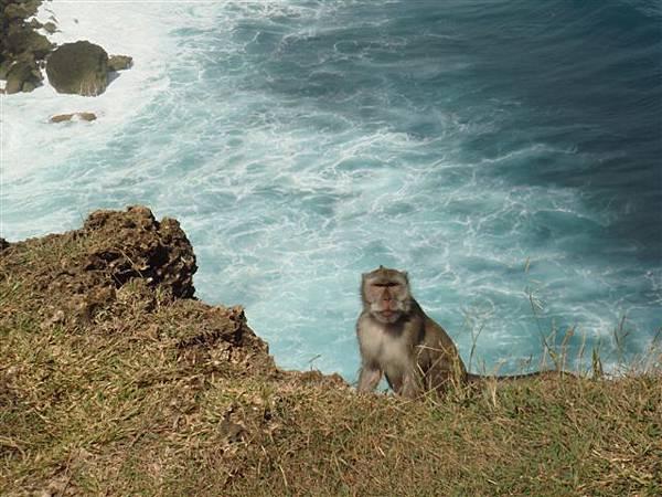 073_猴子與海.JPG