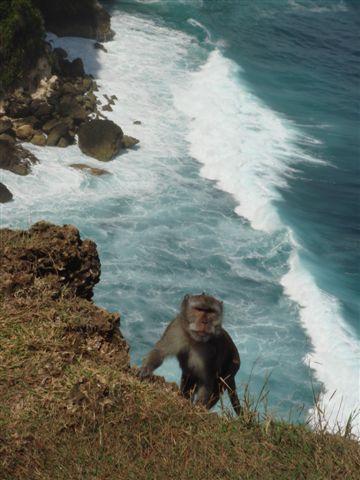074_猴子與海.JPG