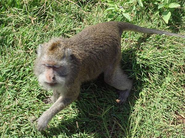 077_潑猴.JPG