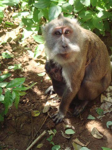 084_帶著小猴的潑猴.JPG