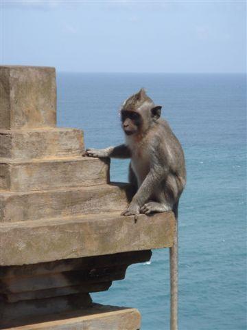 088_小猴與海.JPG