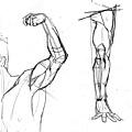 20110625_肩胛骨手臂肌肉連接練習2.jpg