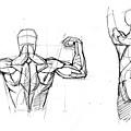 20110707_人體的背部結構組合練習1.jpg