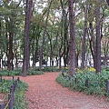 014_白川公園.JPG