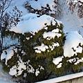 002_積雪.JPG