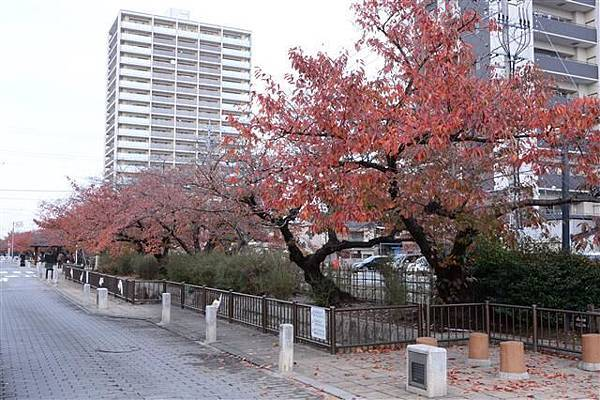 166_街道.JPG