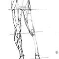 20170107_01骨盆與腿部結構關聯.jpg