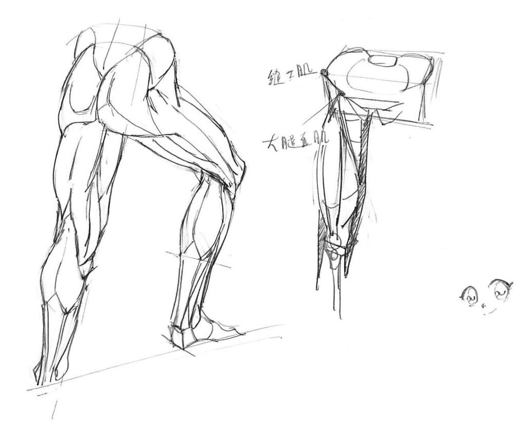 20170114_01骨盆腿膝蓋腳的組合.jpg