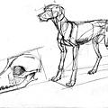 20110521_狗頭部和肌肉動態練習2.jpg