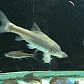 087_盲魚.JPG