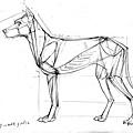 20110521_狗頭部和肌肉動態練習1.jpg