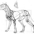 20110515_認識動物狗的骨骼作業1.jpg