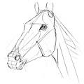 20110430_認識馬的頭部與應用練習1.jpg