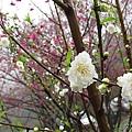 013_杏花園.JPG