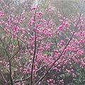 018_杏花園.JPG