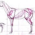 20110424_認識動物馬的肌肉練習1.jpg