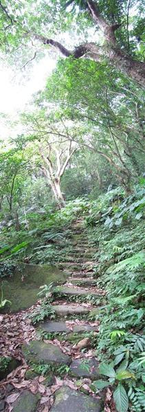 大板根森林步道1.jpg