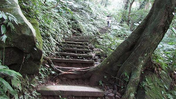 011_森林步道.JPG