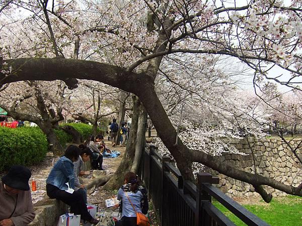 大阪城 櫻花