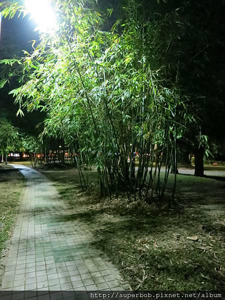 大安公園的夜