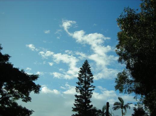 好藍的天,好高的樹