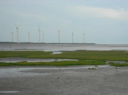 高美濕地的風車