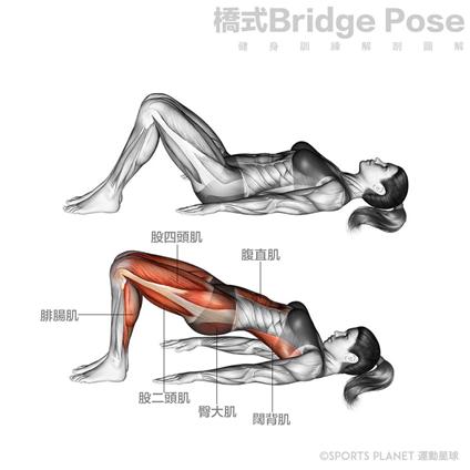 <SuperFIT居家健身菜單>蜜桃臀橋式訓練