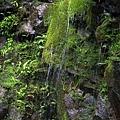 旁邊的藻類