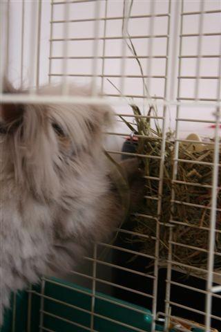 他比較愛吃草