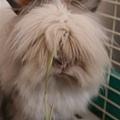 大頭兔 :D